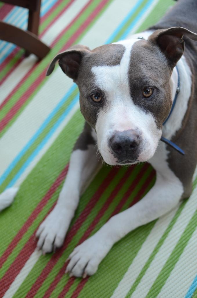 Dog on Striped Rug